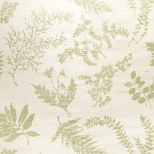 Green On Vanilla Floral Wallcovering by Stroheim Wallpaper