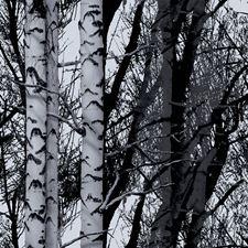 334-0028 Birch Forest Premium Window Film by Brewster
