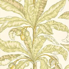 Kiwi Wallcovering by Schumacher Wallpaper