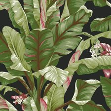 Black/Light to Dark Green/Brown Tropical Wallcovering by York