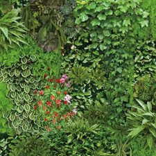 RMK11567RL Living Wall by York